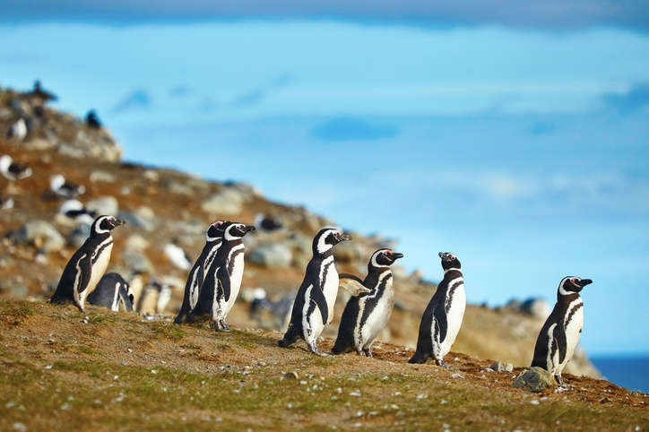 Cool-climate animals
